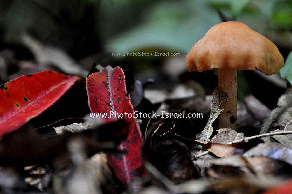 toadstool, Photographed in India, Sikkim