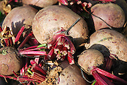 Israel, Haifa, Wadi Nisnas, Beetroots (Beta vulgaris) on display