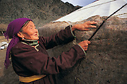 Uriankhai Woman<br /> Erecting ger<br /> Traditional Archer ethnic group<br /> Western Mongolia