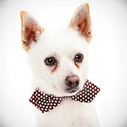 Good pet photography helps shelter dogs get adopted.