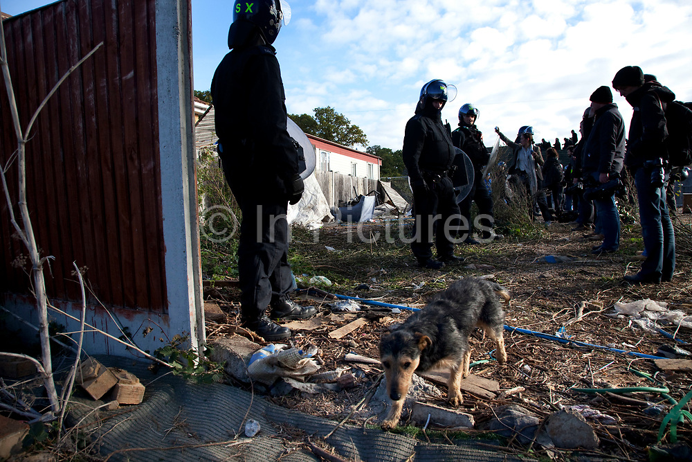 Riot police lines and a local dog. Travellers at Dale Farm site prior to eviction. Riot police and bailiffs were present on 20th October 2011, as the site was cleared of the last protesters chained to barricades. Dale Farm is part of a Romany Gypsy and Irish Traveller site in Crays Hill, Essex, UK<br /> <br /> Dale Farm housed over 1,000 people, the largest Traveller concentration in the UK. The whole of the site is owned by residents and is located within the Green Belt. It is in two parts: in one, residents constructed buildings with planning permission to do so; in the other, residents were refused planning permission due to the green belt policy, and built on the site anyway.