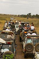 A line of safari vehicles, Serengeti National Park, Tanzania