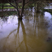 AWY7B2 Tree reflection in flooded river Suffolk