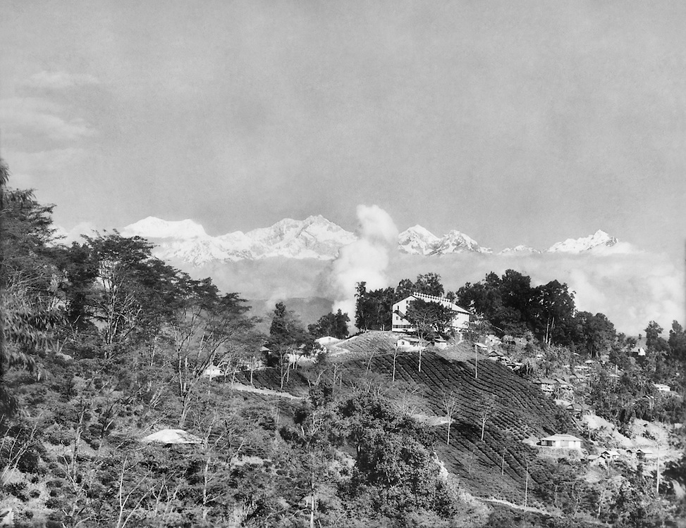 Tea Garden with Himalaya Range, Teesta Valley, India, 1929