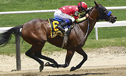 June 9, 2018 - Elmont, New York, U.S - The Belmont Stakes wasn't the only race that jockey MIKE SMITH won on the day that he and Justify took the Triple Crown here at Belmont Park in New York. Here, Smith and ABEL TASMAN (who, like Justify and American Pharoah, was trained by Bob Baffert) leads in the stretch, and won the Ogden Phipps Stakes, the 3rd race at Belmont before Smith and Justify won the Belmont Stakes in the 11th. (Credit Image: © Staton Rabin via ZUMA Wire)