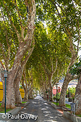 A grove of trees in Mahico, Madeira. MADEIRA, September 25 2018. © Paul Davey