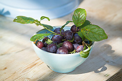 Picked plums in a bowl