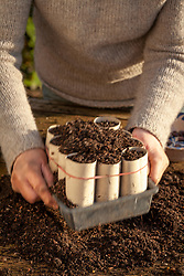 Sowing broad beans in recycled loo rolls. Filling toilet roll middles with compost
