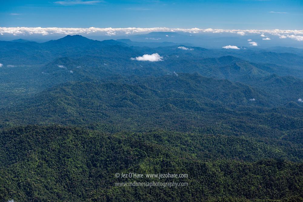 Rain forest, East Kalimantan, Indonesia.