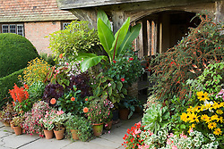 Pots display in front of the porch at Great Dixter. Plants include Ensete ventricosum, Pelargonium 'Frank Headley', Pseudopanax lessonii 'Gold Splash', Begonia scharfii, rudbeckias, fuchsias and aeoniums
