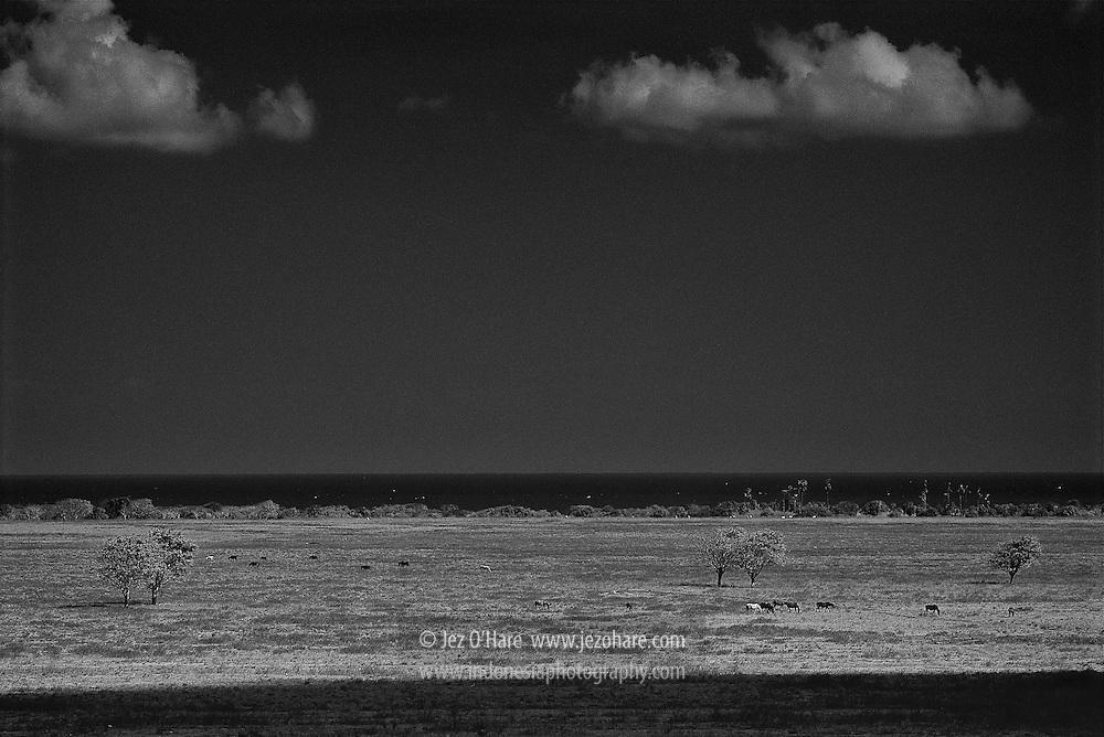 Horses by the sea, East Sumba, East Nusa Tenggara, Indonesia.