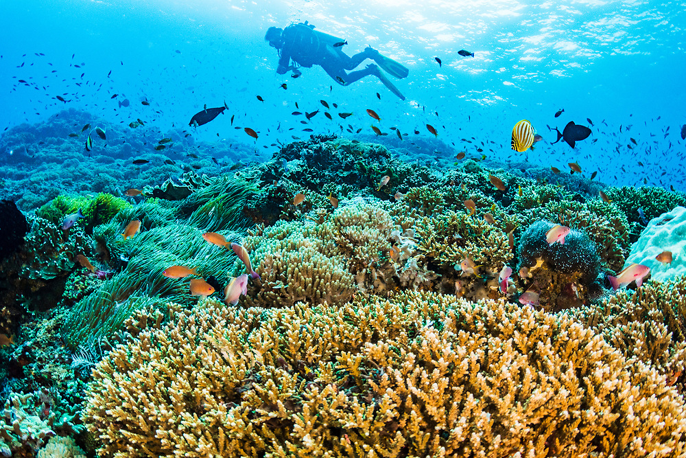A scuba diver swims along a beautiful coral reef off Bali, Indonesia