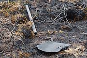 Remains of fire-beater on burnt heathland. Upton Heath, Dorset, UK.