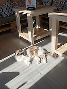 A cat lounges in the sunlight at the Cat Cafe, Vilnius, Lithuania.