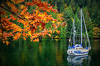 A blue and white sailboat rests at anchor in near Gowlland Tod Provincial Park, on the backside of Butchart Gardens, near Victoria, on Vancouver Island, British Columbia surrounded by fall colors.