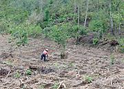 A man works clearing a field at the edge of the forest. San Juan la Laguna. Departamente de Sololá, Republic of Guatemala. 06Mar14