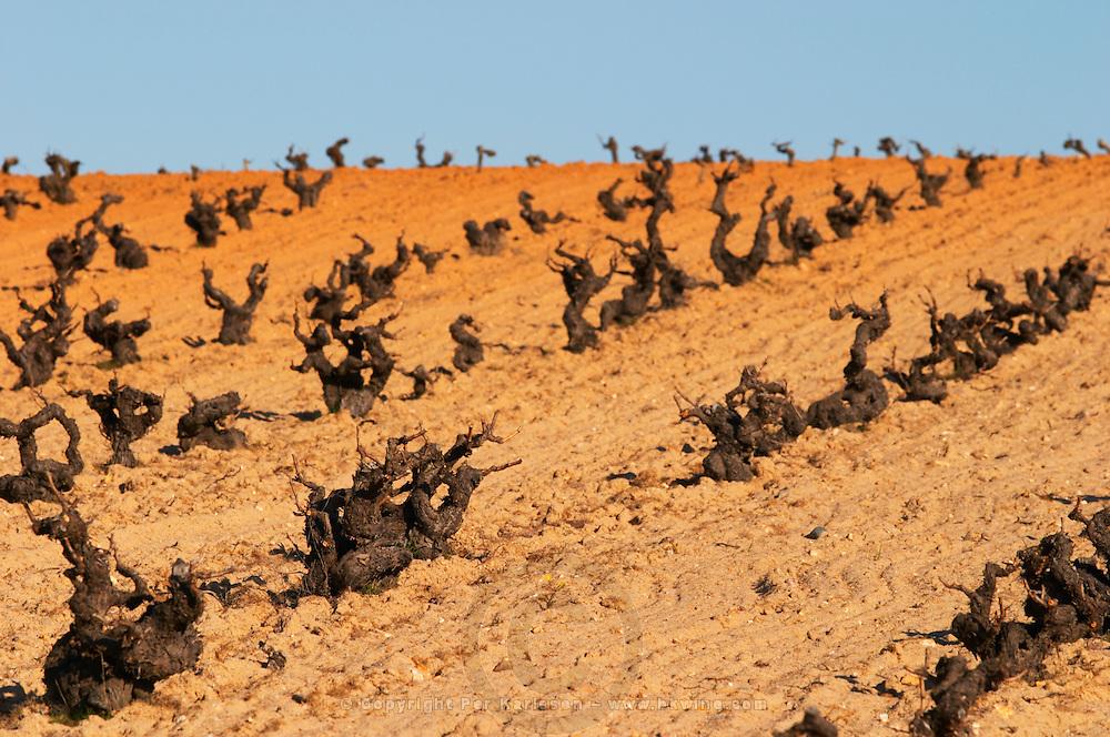 tempranillo old vine sandy soil Bodegas Vinas del Cenit, DO Tierra del Vin de Zamora spain castile and leon