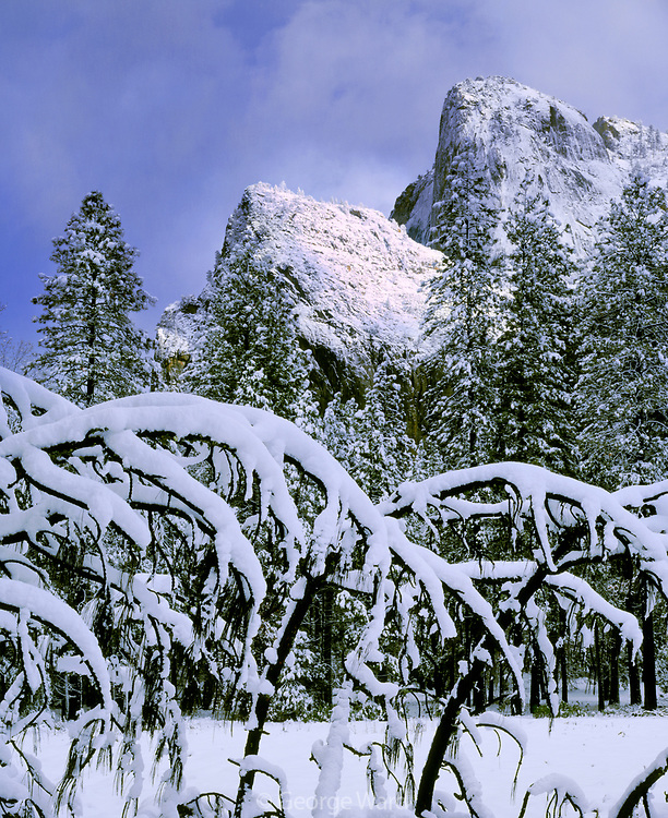 Cathedral Rocks andBranches with Snow,Yosemite National Park, California