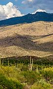 The Rincon Mountains in Saguaro National Park, Arizona