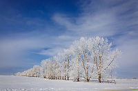Winter photography on the prairie farmland East of Calgary<br /> <br /> ©2018, Sean Phillips<br /> http://www.RiverwoodPhotography.com