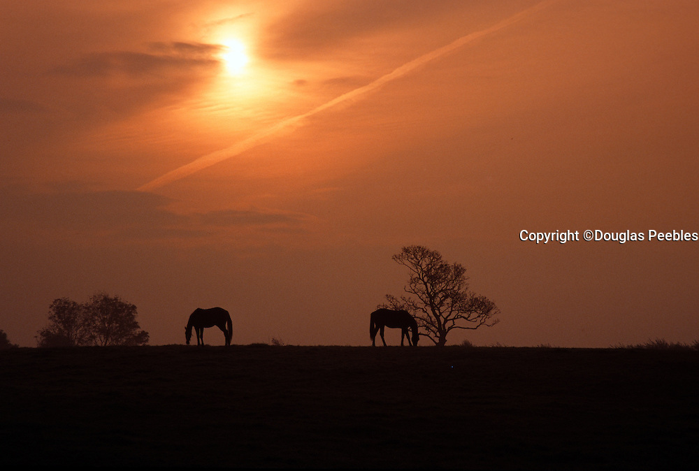 Horse, Shannon, Ireland