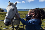 Horses near Waterville with the Skellig Rocks in background in County Kerry Ireland.<br /> Picture by Don MacMonagle -macmonagle.com