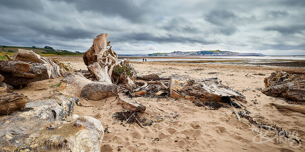 Large sculptural pieces of driftwood washed up on the beach at Instow North Devon UK