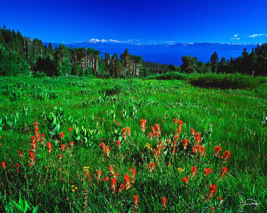 Lake Tahoe Scenic Red Flowers Lake Tahoe