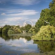 Il lago in St. James Park, sullo sfondo la ruota panoramica London Eye<br /> <br /> The small lake in St. James Park, on background the panoramic wheel London Eye.<br /> <br /> #350d, #photooftheday #picoftheday #bestoftheday #instadaily #instagood #follow #followme #nofilter #everydayuk #canon #buenavistaphoto #photojournalism #flaviogilardoni <br /> <br /> #london #uk #greaterlondon #londoncity #centrallondon #cityoflondon #londontaxi #londonuk #visitlondon<br /> <br /> #photo #photography #photooftheday #photos #photographer #photograph #photoofday #streetphoto #photonews #amazingphoto #blackandwhitephoto #dailyphoto #funnyphoto #goodphoto #myphoto #photoftheday #photogalleries #photojournalist #photolibrary #photoreportage #pressphoto #stockphoto #todaysphoto #urbanphoto