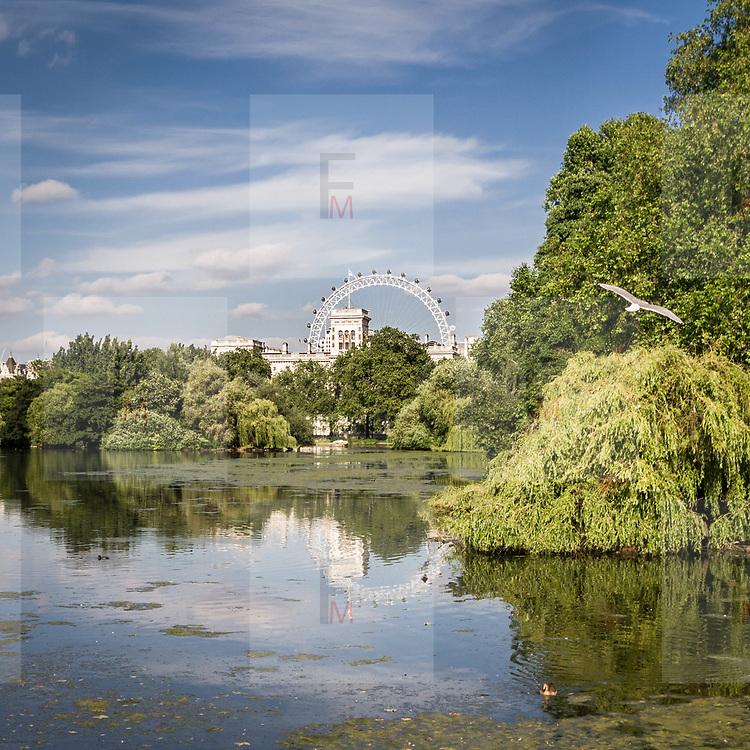 Il lago in St. James Park, sullo sfondo la ruota panoramica London Eye<br /> <br /> The small lake in St. James Park, on background the panoramic wheel London Eye.<br /> <br /> #350d, #photooftheday #picoftheday #bestoftheday #instadaily #instagood #follow #followme #nofilter #everydayuk #canon #buenavistaphoto #photojournalism #flaviogilardoni <br /> <br /> #london #uk #greaterlondon #londoncity #centrallondon #cityoflondon #londontaxi #londonuk #visitlondon<br /> <br /> #photo #photography #photooftheday #photos #photographer #photograph #photoofday #streetphoto #photonews #amazingphoto #blackandwhitephoto #dailyphoto #funnyphoto #goodphoto #myphoto #photoftheday #photogalleries #photojournalist #photolibrary #photoreportage #pressphoto #stockphoto #todaysphoto #urbanphoto