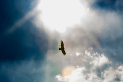 A Bird flies high in the skies catching some rays. There is freedom in flight