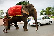 04 JULY 2006 - PHNOM PENH, CAMBODIA: An elephant crosses Sisowath Quay, the main riverfront boulevard in Phom Penh, Cambodia.  Photo by Jack Kurtz