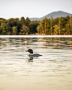 RRT On Golden Pond