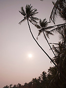 Palm trees in Tangalle, Sri Lanka