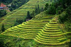September 6, 2017 - Congjiang, China - Autumn is the best season to view the beautiful scenery of terraced fields in Congjiang, southwest China's Guizhou Province. (Credit Image: © SIPA Asia via ZUMA Wire)