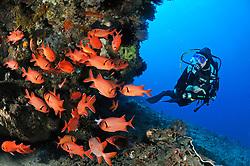 Myripristis murdjan, Taucher und Schwarm von Soldatenfischen, Scuba diver with school of soldierfishes, Bali, Indonesien, Indopazifik, Bali, Indonesia Asien, Indo-Pacific Ocean, Asia