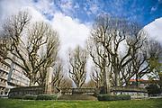 Looking at the front of Alameda de Pontevedra park in spring, Pontevedra, Spain Ⓒ Davis Ulands | davisulands.com