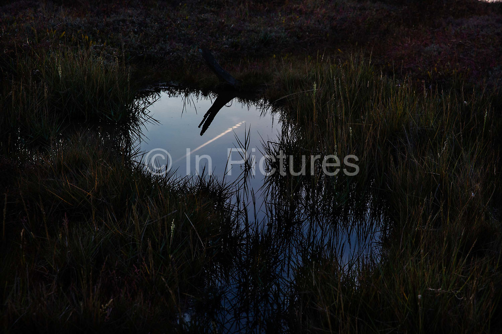 Reflection of passing plane in a creek pool in Tollesbury, a village in England, located on the Essex coast at the mouth of the River Blackwater, Essex, United Kingdom. For centuries Tollesbury, the village of the plough and sail, relied on the harvests of the land and the sea. The main trade and export of Tollesbury, which still thrives to this day, has long been oysters.