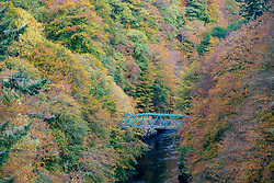 footbridge with autumn colours on trees surrounding River Garry at Garry Bridge near Killiecrankie, Scotland, UK