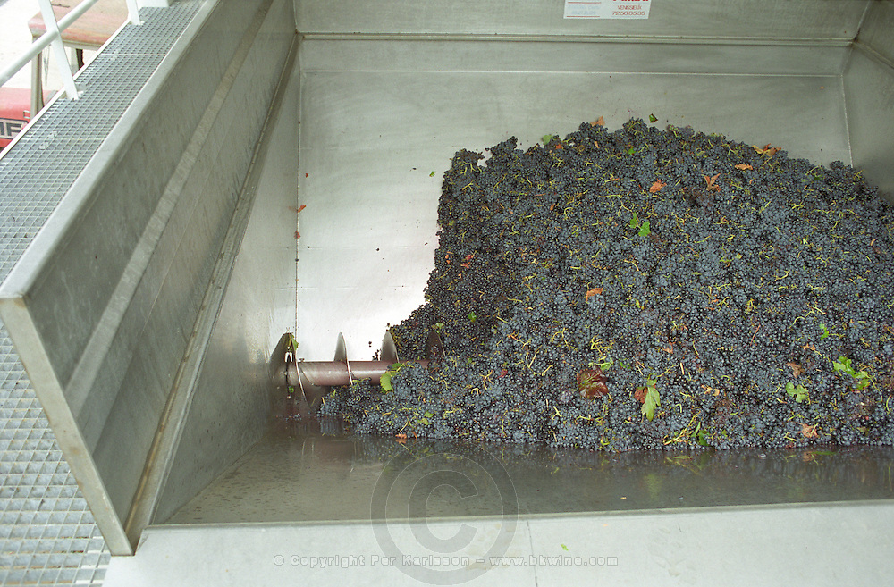 Grapes just brought in from harvest in the grape reception area with an Archimedes screw to push them to the winery, Domaine Saint Martin de la Garrigue, Montagnac, Coteaux du Languedoc, Languedoc-Roussillon, France