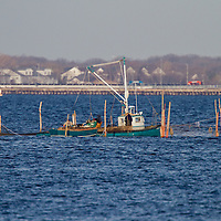 A commercial fishing boat works to remove fish caught in pounds nets in Sandy Hook Bay.