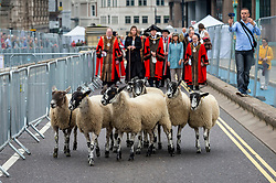 © Licensed to London News Pictures. 26/09/2021. LONDON, UK.  Sheep precede Amanda Owen, The Yorkshire Shepherdess, the Lord Mayor of London, The Right Honourable William Russell, and other Freemen of the City, during the annual sheep drive on Southwark Bridge.  Organised by Worshipful Company of Woolmen, the event recognises the historical right of Freemen of the City to drive sheep over the Thames and into the City.  Photo credit: Stephen Chung/LNP