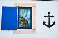 France, Loire-Atlantique (44), Batz-sur-Mer, peinture murale sur une maison de bord de mer // France, Loire-Atlantique, Batz-sur-Mer