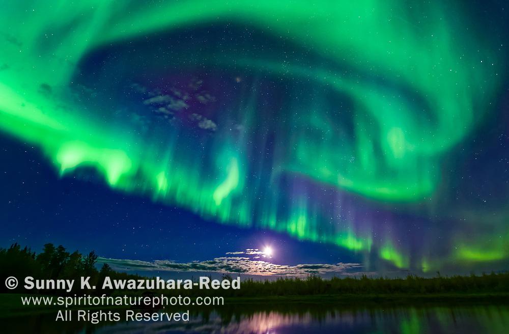 Bright green aurora swirling over Harding Lake, Fairbanks, Interior Alaska, Autumn.