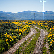 A dirt road in the Antelope Flats area of Grand Teton National Park, Wyoming.