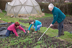 People weeding on an allotment.