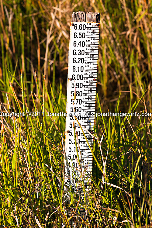 Water level indicator scale in canal next to Anhinga Trail, Everglades National Park. WATERMARKS WILL NOT APPEAR ON PRINTS OR LICENSED IMAGES.