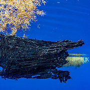 A large piece of black plastic, probably a former garbage bag, floats among sargassum seaweed in the Sargasso Sea, Atlantic Ocean.