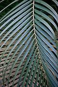 Design motif of palm fronds