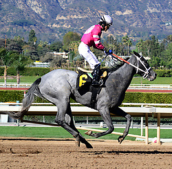 February 25, 2018 - Arcadia, CA, USA - CALI EAGLE with jockey MATTS S. GARCIA pass the finish line in last place but in elegant form during race 6 at Santa Anita Race Track, Arcadia, California, USA, February 24, 2018...Credit Image  cr  Scott Mitchell/ZMa Press (Credit Image: © Scott Mitchell via ZUMA Wire)